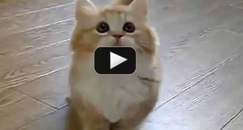 Not Another Cat Video